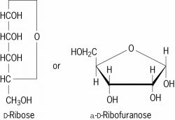 d-ribose | article about d-ribose by the free dictionary diagram of maturation of follicle diagram of ribose deoxy