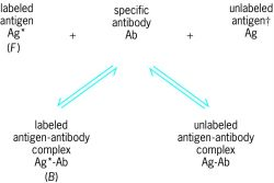 "Competing reactions that form basis of radioimmunoassay; * indicates the labeled antigen, and † ""in known standard solutions or unknown samples"