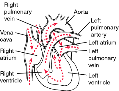 Aortic atresia definition of aortic atresia by medical dictionary ccuart Gallery