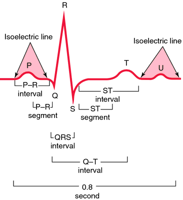 ECG | definition of ECG by Medical dictionary