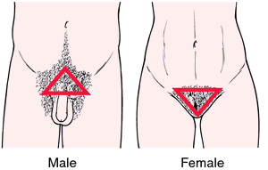 Pubic hair in males