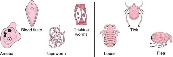 viermi cilindrici tratamentul paraziților fungici