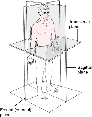 Transverse Plane Definition Of Transverse Plane By Medical Dictionary