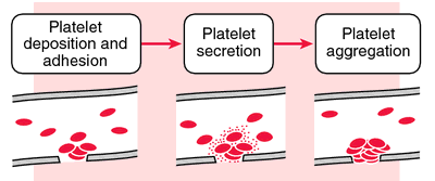 Platelet Plug Formation | Definition Of Platelet Plug Formation By Medical  Dictionary