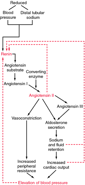 Reninangiotensinaldosterone System Definition Of Renin. Reninangiotensinaldosterone System Definition Of By Medical Dictionary. Wiring. Aldosterone Hormone Feedback Loop Homeostasis Diagram For At Scoala.co