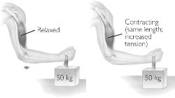 isometric exercise short meaning