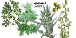 Common wormwood | Article about common wormwood by The Free Dictionary