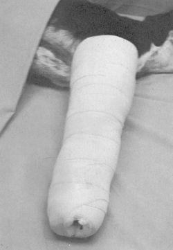 Plaster bandage | definition of plaster bandage by Medical