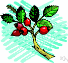 rose hip - the fruit of a rose plant