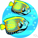 butterfly fish - small usually brilliantly colored tropical marine fishes having narrow deep bodies with large broad fins