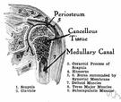 durere după vânătăi a articulației umărului cum să alinați durerile articulare la nivelul brațelor