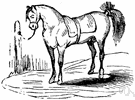 poster - a horse kept at an inn or post house for use by mail carriers or for rent to travelers