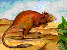 Sand rat - small nearly naked African mole rat of desert areas