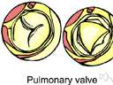 pulmonary valve - a semilunar valve between the right ventricle and the pulmonary artery