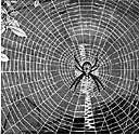 webbed - having open interstices or resembling a web