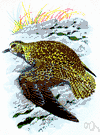 golden plover - plovers of Europe and America having the backs marked with golden-yellow spots
