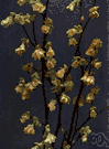 corylopsis - small genus of deciduous shrubs of temperate regions of Asia