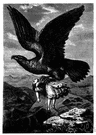 eyrie - the lofty nest of a bird of prey (such as a hawk or eagle)