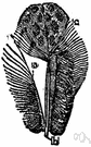 aftershaft - a supplementary feather (usually small) on the underside of the base of the shaft of some feathers in some birds