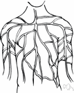 systema nervosum - the sensory and control apparatus consisting of a network of nerve cells