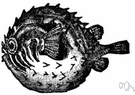globefish - any of numerous marine fishes whose elongated spiny body can inflate itself with water or air to form a globe