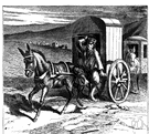 mule driver - a worker who drives mules