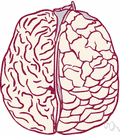 hemisphere - either half of the cerebrum