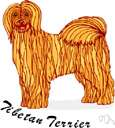 Tibetan terrier - breed of medium-sized terriers bred in Tibet resembling Old English sheepdogs with fluffy curled tails