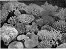 reef - a submerged ridge of rock or coral near the surface of the water