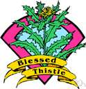 blessed thistle - annual of Mediterranean to Portugal having hairy stems and minutely spiny-toothed leaves and large heads of yellow flowers