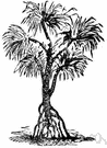 Screw tree - a tree or shrub of the genus Helicteres