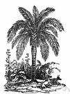 genus Ceroxylon - wax palms