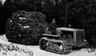 tree farming - the cultivation of tree for the production of timber