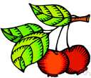cherry apple - Asian wild crab apple cultivated in many varieties for it small acid usually red fruit used for preserving