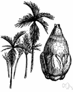 black catechu - extract of the heartwood of Acacia catechu used for dyeing and tanning and preserving fishnets and sails