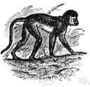 Marburg disease - a viral disease of green monkeys caused by the Marburg virus
