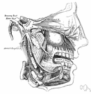 third cranial nerve - supplies extrinsic muscles of the eye