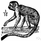 Saimiri sciureus - small long-tailed monkey of Central American and South America with greenish fur and black muzzle