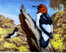 redhead - black-and-white North American woodpecker having a red head and neck