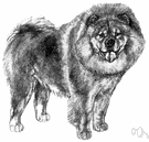 chow - breed of medium-sized dogs with a thick coat and fluffy curled tails and distinctive blue-black tongues