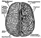 arteria meningea - any of three arteries supplying the meninges of the brain and neighboring structures