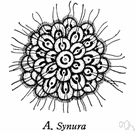 class Flagellata - protozoa having flagella