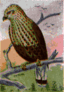 Buteo lagopus - large hawk of the northern hemisphere that feeds chiefly on small rodents and is beneficial to farmers