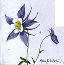 Aquilegia caerulea - columbine of the Rocky Mountains having long-spurred blue flowers