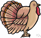 Meleagris - type genus of the Meleagrididae: wild and domestic turkeys