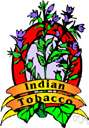 tobacco - aromatic annual or perennial herbs and shrubs