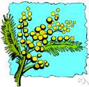 Mimosoideae - alternative name used in some classification systems for the family Mimosaceae