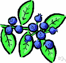 blueberry - any of numerous shrubs of the genus Vaccinium bearing blueberries