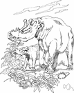 genus Uintatherium - type genus of the Uintatheriidae