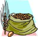 macrobiotic diet - a diet consisting chiefly of beans and whole grains